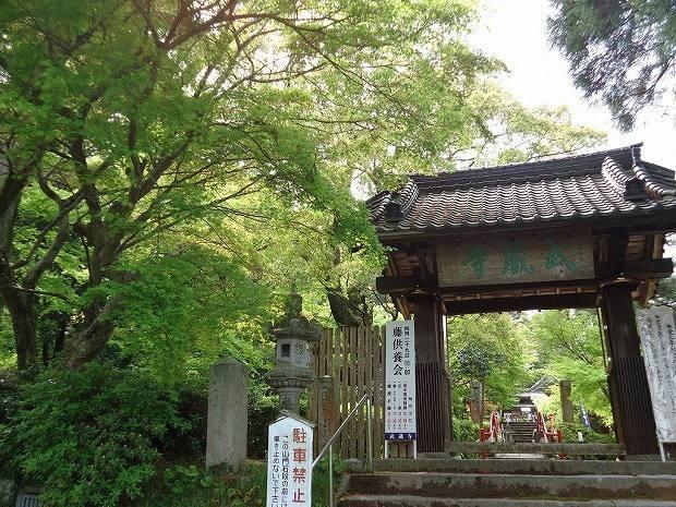 Wisteria flowers at Buzoji temple in Chikushino city