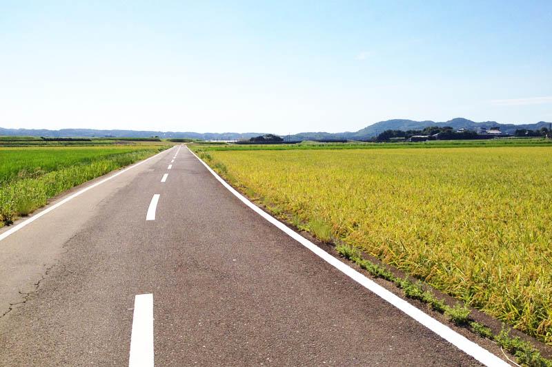 Ini adalah jalan lurus di Pulau Iki. Sawah terbentang di kedua sisi.